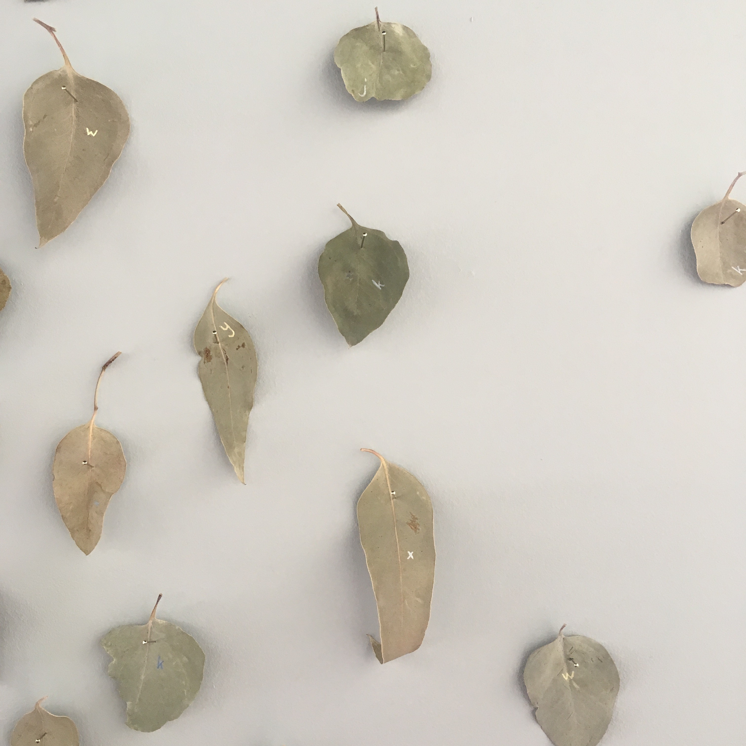 Detail: Fish out of Water, Mildura – Melbourne, gum leaves collected half way along the highway between Mildura and Melbourne and gouache, approximately 200h x 300w cm, 2018